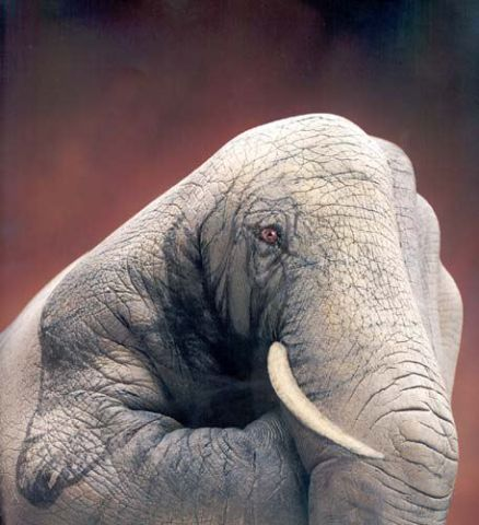 animain_elephant_2