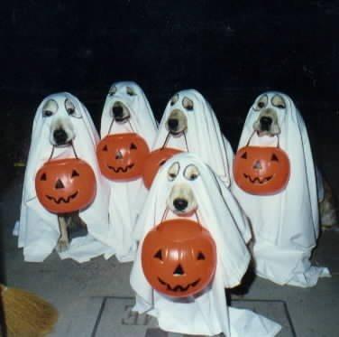 chiens.halloween