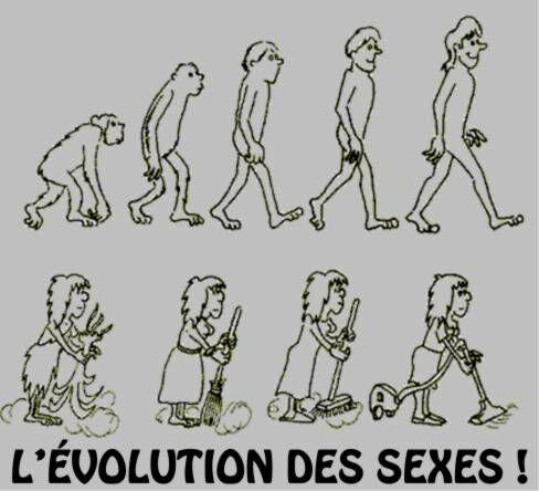 evolution_des_sexes