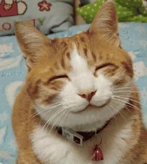 funny_pets_14