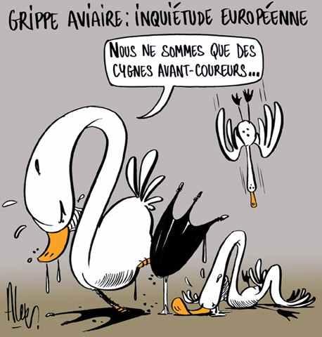 grippe aviaire cygnes avant coureurs