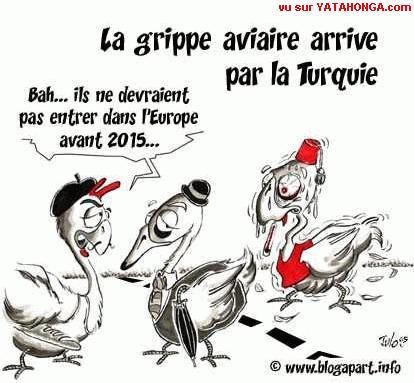 grippe_aviaire_turquie