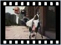 humour image photo crazy cow i like to moo